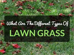 Grass Identification Chart Uk What Are The Different Types Of Lawn Grass Easylawnmowing