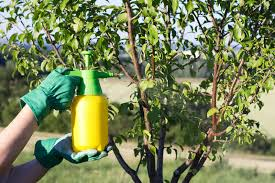garden pesticides. Download Use Hand Sprayer With Pesticides In The Garden. Stock Image - Of Countryside Garden