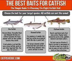 Best Catfish Bait The Top 5 Catfish Baits Made Simple