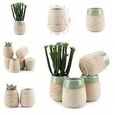 cactus plant pots planting succulents