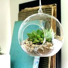 glass plant terrariums best glass bulbs s on hanging terrarium glass plant terrarium ireland