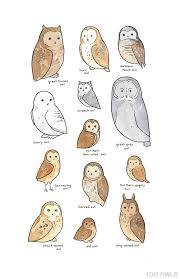 Illustrated Owl Species Chart Whimsical Art Print