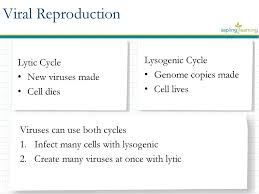 Lytic And Lysogenic Cycle Venn Diagram Viruses Biology 4 C Ppt Download
