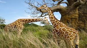 full hd images of animals. Simple Full Animals Background 6 Intended Full Hd Images Of