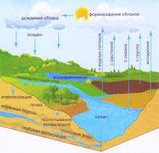 Круговорот воды кратко Биология Реферат доклад сообщение  Рис 144 Круговорот воды в биосфере