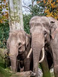 500+ Indian Elephant Pictures ...
