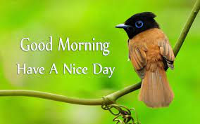 Nice Day With Cute Birds Images ...
