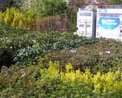 organic lawn care and organic tree