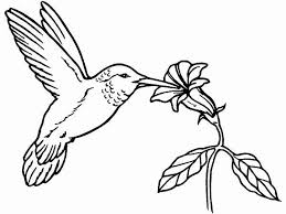 Small Picture realistic hummingbird coloring pages gianfredanet 498122