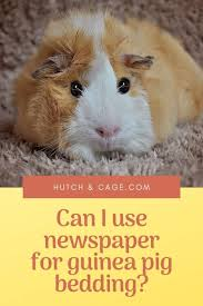 use newspaper for guinea pig bedding