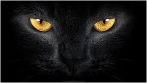 Feel like something's missing on your home screen? Black Cheetah Wallpaper Posted By Samantha Simpson