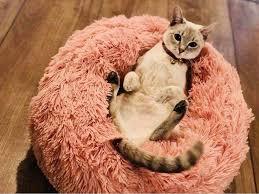 Comfy Calming Dog Bed Dog Mats <b>Warm Cotton Cat</b> Mattress ...