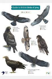 British Garden Birds Chart Birds Of Prey Field Studies Council