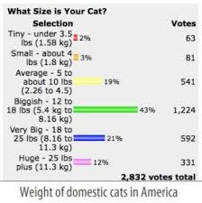British Shorthair Weight Chart Kg Average Kitten Weight Chart Bedowntowndaytona Com