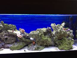 Il mio primo acquario marino [archivio] acquaportal forum
