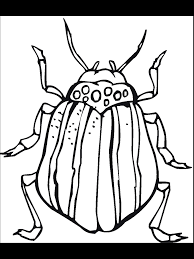 Bug & Insect Coloring Pages - PrimaryGames.com