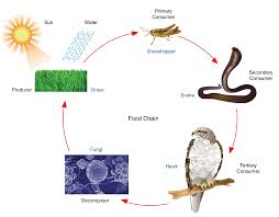 Energy For Life An Overview Of Photosynthesis Opencurriculum