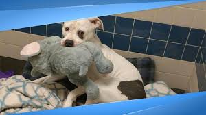 Sad Shelter Dog Just Learned He And His Elephant Are Going Home ...