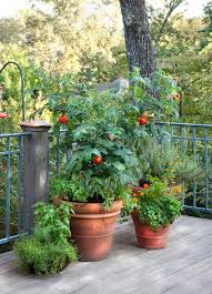 Grow A Container Vegetable Garden On Your Patio Tips  The Foodie Container Garden Plans Tomatoes