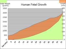 Who Fetal Growth Chart Fetal Growth Chart Helps Fetal Growth Assessment