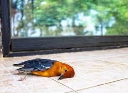 Vogelschlag Am Fenster Kraut Rüben