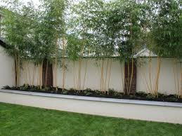 Wonderful Plants For Screening Fence Images - Best idea home .