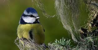 Bilderesultat for bilder av fugler