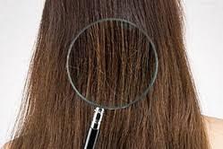 「髪の乾燥 対策」の画像検索結果