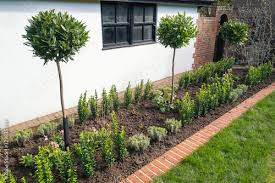 bay trees planted in a flower bed edged