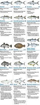 Florida Saltwater Fishing Regulations Chart Coastal Species Florida Saltwater Fishing Regulations
