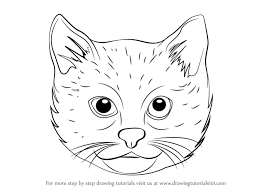 easy cat face drawing. Exellent Cat How To Draw A Cat Face With Easy Drawing D