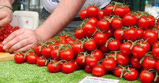 Image result for campari tomatoes