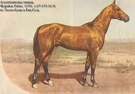Ахалтекинская лошадь ахалтекинская лошадь рассадник выставки  Ахалтекинская лошадь