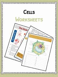 Cell Facts, Information & Worksheet | Animals, Human & Plants