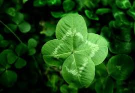 four leaf clover desktop wallpaper. Perfect Four Four Leaf Clover With Four Leaf Clover Desktop Wallpaper