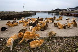 hundreds of cats.  Cats This Is Tashirojima Japan Or U0027Cat Islandu0027 Home To Hundreds Of Feral Cats  The Population Cats Now Greater Than Humans Throughout Hundreds Of Cats J
