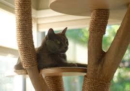 cat tree playground 17