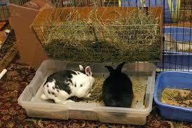 diy litter box setups coding with bunnies