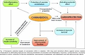 cannabidiol news