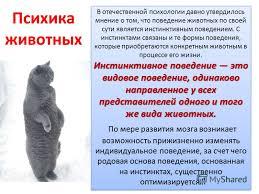 Реферат Родство и различие психики животных и человека pib  Реферат отличия психики человека и животного