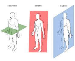 planes of movement planes of motion jpg anatomical terms planes of movement planes of motion jpg