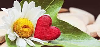Jarní Svatba Nabízí Obřady V Záři Slunce S Vůni čerstvých Květin