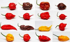 Ghost Pepper Chart Fresh Super Hot Mix 1 Lb