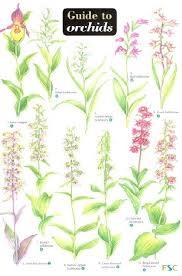 Botany Orchids