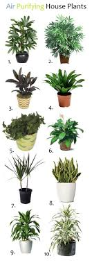 BEST HOUSE PLANTS FOR CLEAN AIR AND BETTER HEALTH | Plants, Gardens and  Indoor