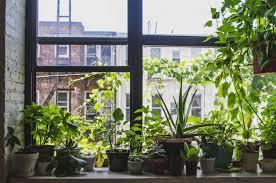 tips for setting up a windowsill garden