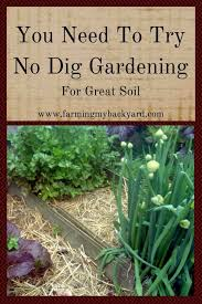 you need to try no dig gardening for great soil