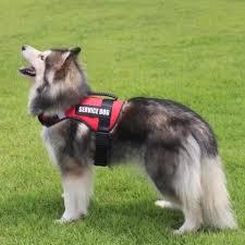 <b>No</b> Pull <b>Personalized Dog Harness</b> - Latest Updates | Facebook