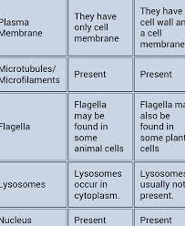 Cell Structure And Functions Of Cell Components Globestand
