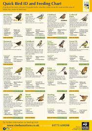 Bird Id And Feeding Chart Animals Common Garden Birds